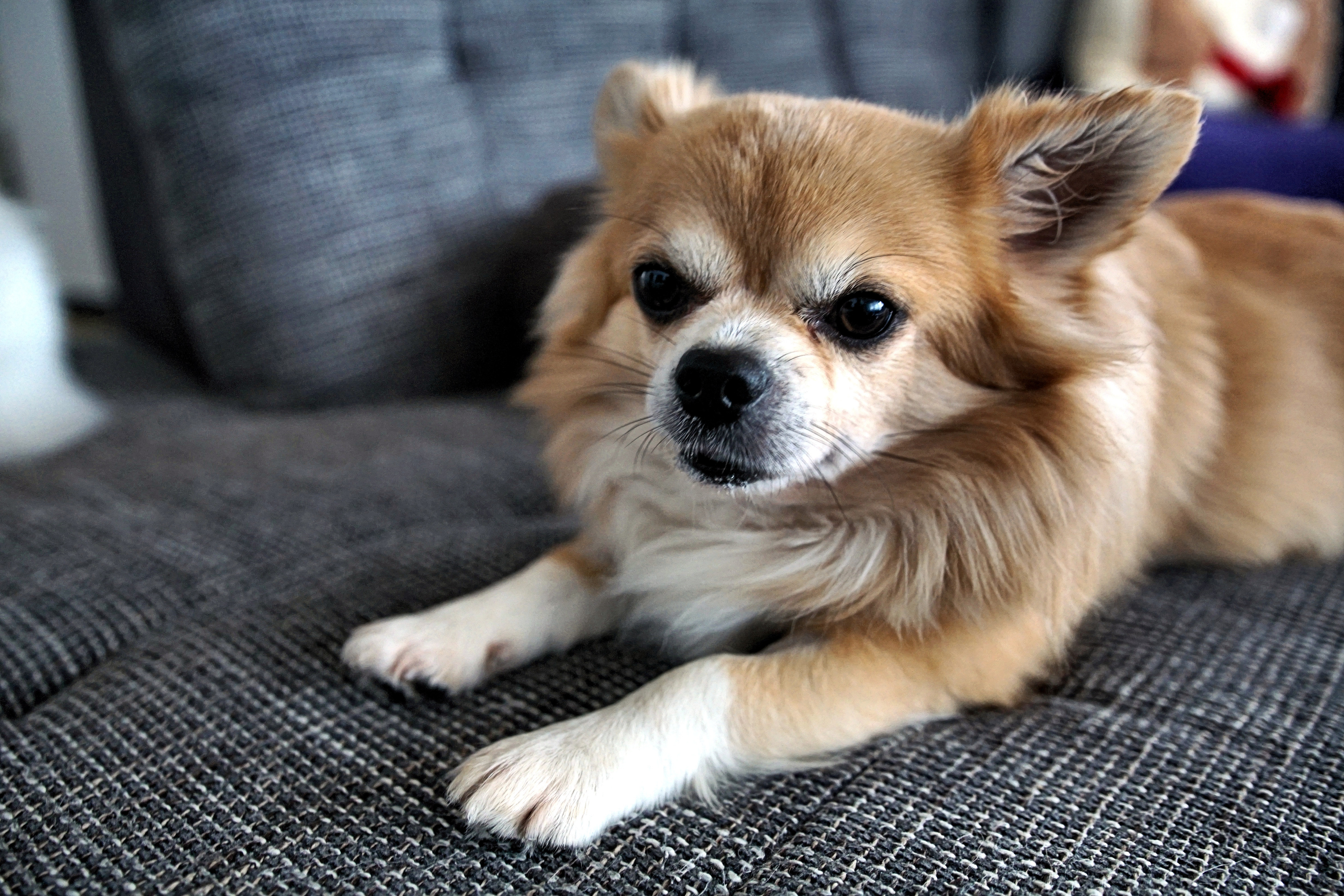 Simon der Hund